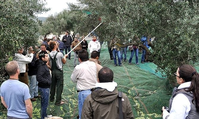 production-research-institute-in-chania-emerges-as-greek-olive-sector-leader-olive-oil-times-the-institute-for-olive-tree-and-subtropical-plants-in-chania